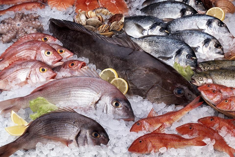 iStock_000013512124_XXXLarge-Fish-resized
