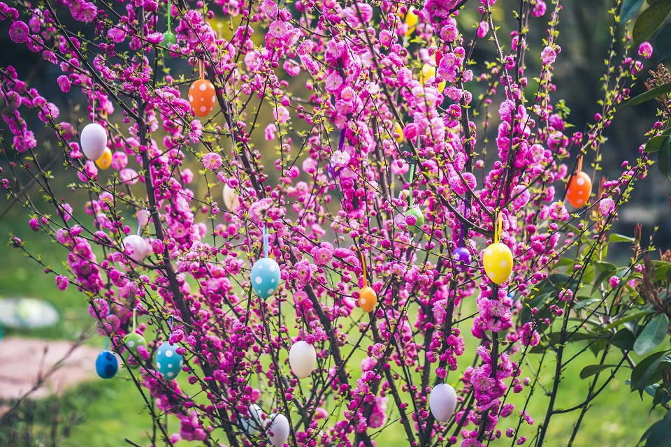 Spring tree with fucia flowers and decorated Easter eggs hanging on branches