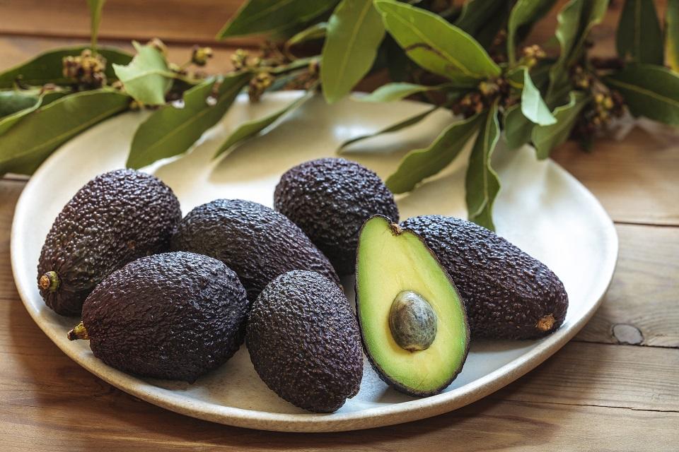 Tiny avocado still life on a plate