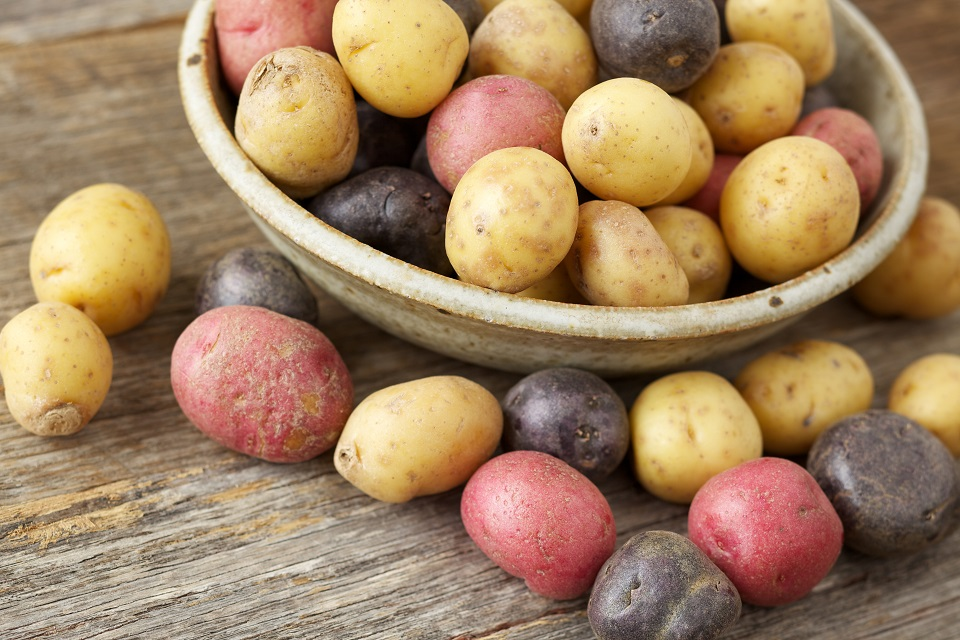 Bowl of fresh, uncut yellow, red and purple small potatoes