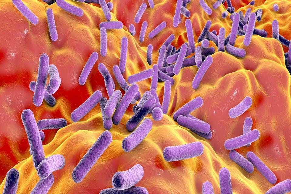 Faecalibacterium prausnitzii bacteria, illustration.